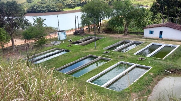 Tipos de tanque para piscicultura veja as diferen as for Elaboracion de estanques para piscicultura