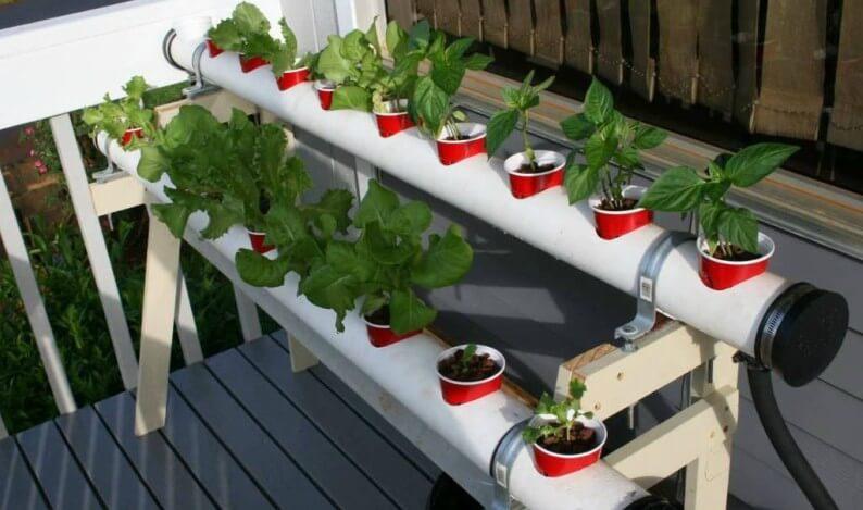 fea21037b4b Como Cultivar Hidropônicos em Casa: Passo a Passo - Instrusul
